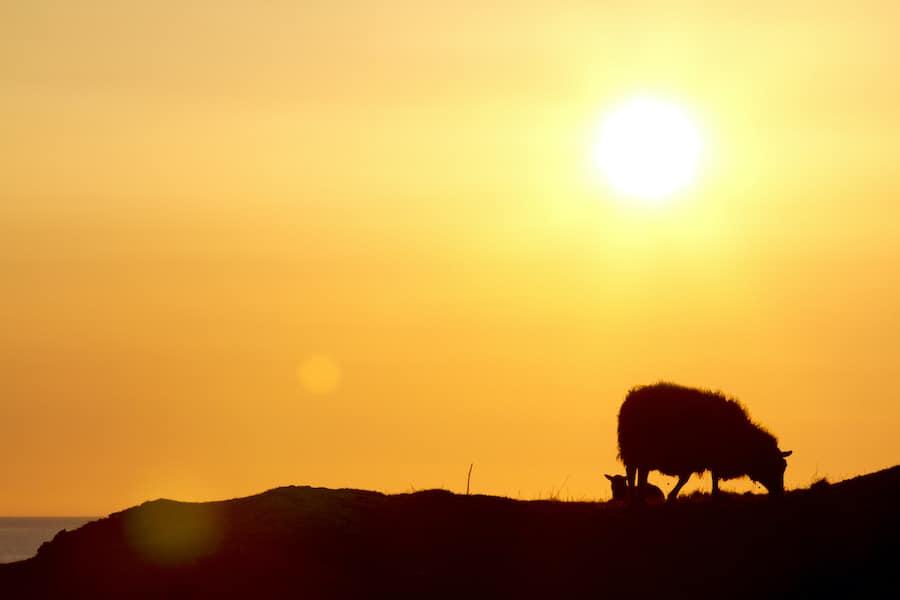 Day of atonement, sanctuary, sacrificial lamb