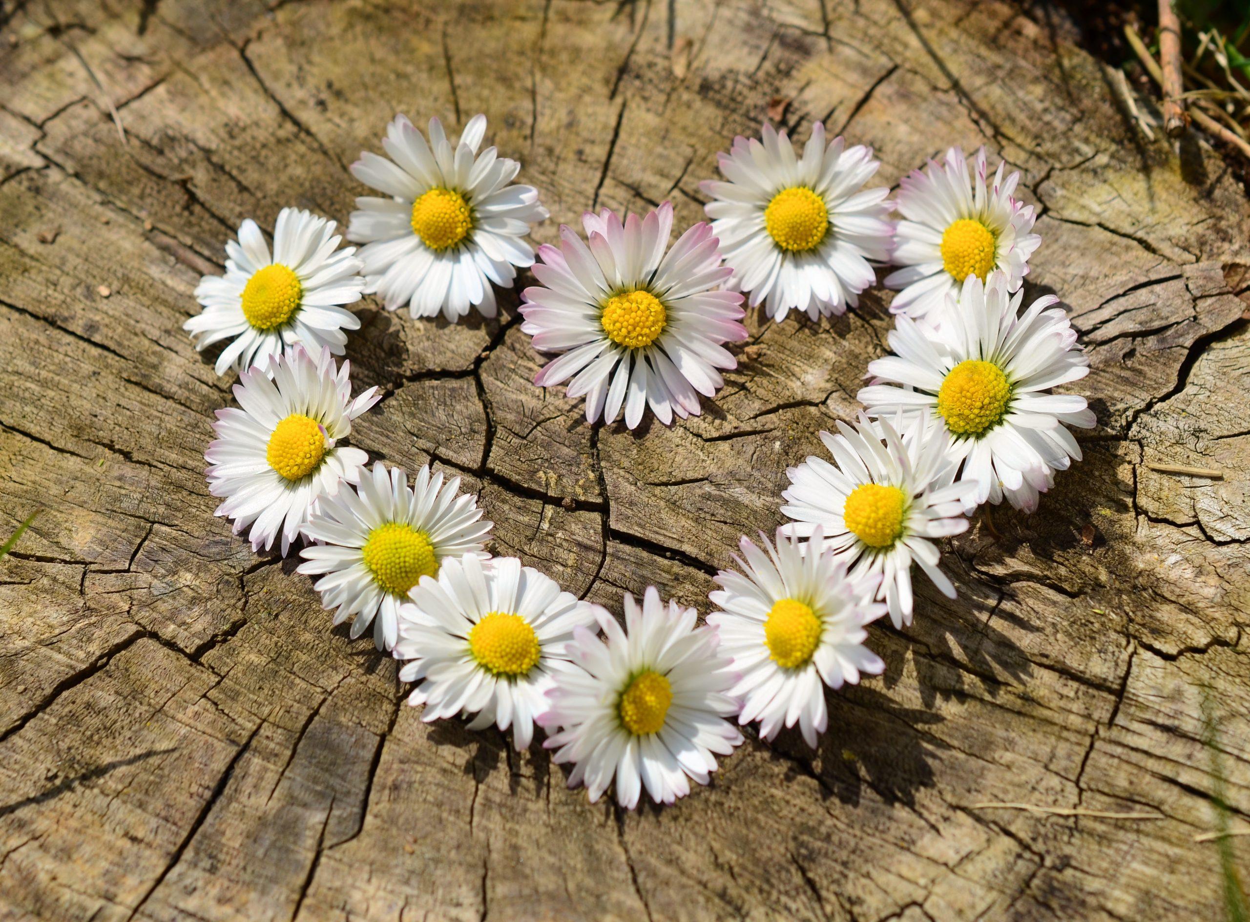 Heart, pixabay, daisy-712892