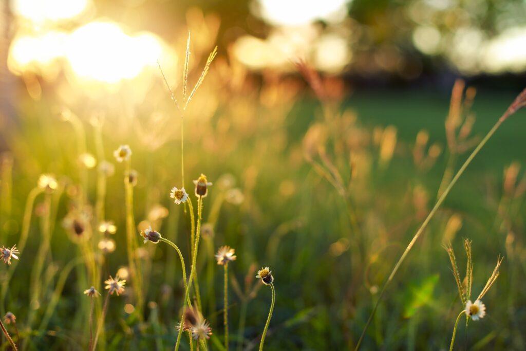 sunshine-1583677