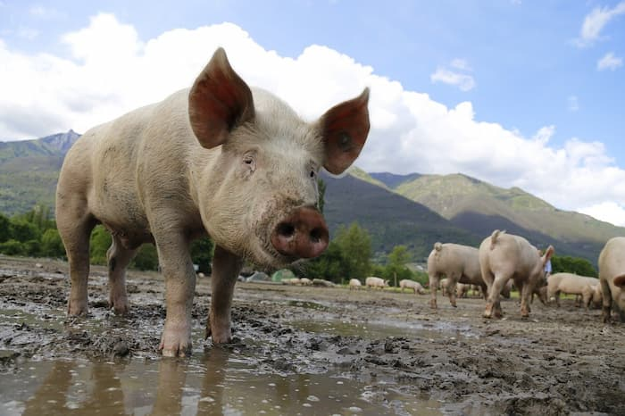 Is pork bad for you?