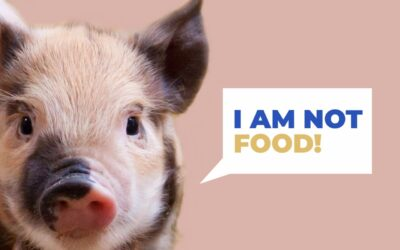 Why is pork bad for you?